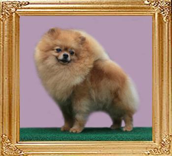 41295z_Volla_of_Pet_Club.jpg