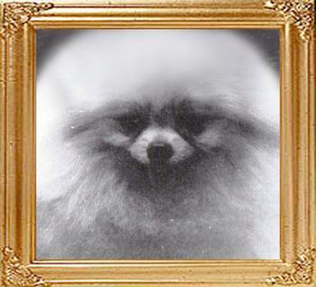 Tookeyes_Welsh_Gold_framed.jpg