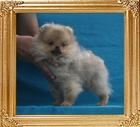 Canton_Cross_My_Heart__2.2lbs_3mo_3wk_P6-6_6553.jpg