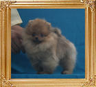 Canton_Galactic_Power_Unregistered_4mo_1.87lbs_P6-4_4276.jpg