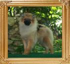 Canton_Kystie_Kringles__6651_5mo_2wk_4lbs_47536.jpg
