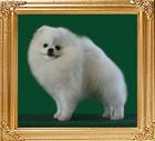 Dietz_of_Hsi_Duo_Li_Ai_Dog_Wu_900128000475313.jpg