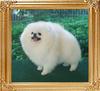 31167z_Ida_of_Chiao_Li_Ya_1_yr_11_mo_F.jpg