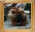 Canton_Kaipara_Prince_1yr_47393.jpg