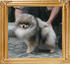Canton_Oda_OSwift_4.73lbs_2yr_3mo_2492.jpg