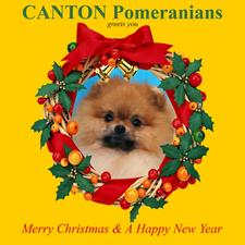 Christmas_card_2011.jpg