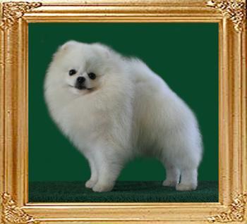 Dietz_of_Hsi_Duo_Li_Ai_Dog_Wu_900128000475313.jpg