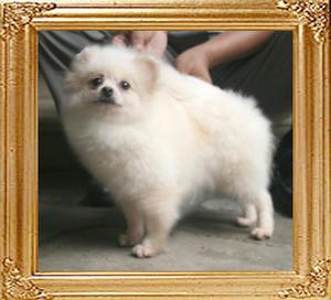 Linda_of_Ming_Dog_House_900138000627963_4yr_5mo_4444_Extend_EarCoat.jpg