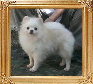 Mira_of_Ming_Dog_House_5.06lbs_3yr_9mo_4982.jpg