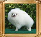 20704z_ROC_Ch_Gundolf_of_Chiao_Li_ya_2_yrs_9_mo_M.jpg