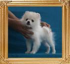 Canton_Bailey_McJones__3.3lbs_3mo_3wk_P6-6_6456.jpg
