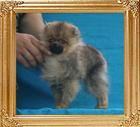 Canton_Believe_in_Your_Stars__2.2lbs_4mo_P6-6_7015.jpg