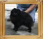 Canton_Black_Emperor_10mo_4.6lbs_47515.jpg