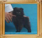 Canton_Black_Irmhild_1.8lbs_3mo_1wk_P6-4_3426.jpg