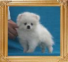 Yingyang_Bailey_Music_1.54lbs_P6-6_2mo_3wk_7934.jpg
