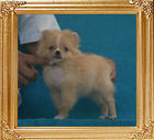 Yingyang_Cream_Pepperine_1.5lbs_2mo_3wk_P6-6_3669.jpg