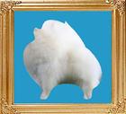 white_8x10.jpg