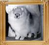 Great_Elms_Little_Tiger_35137.jpg