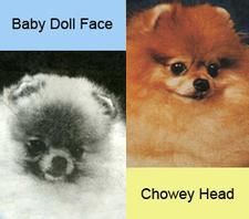 Baby_Face_Chowey_face.jpg