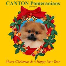 Christmas_card_2011.jpg